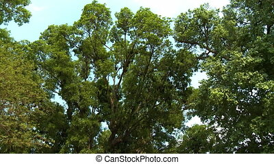 Various trees? leafy branches swaying in the wind - A...
