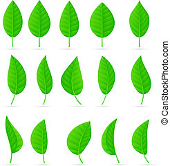 Various types and shapes of green leaves