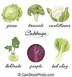 Various types of cabbage.