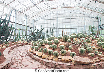 Various types of cactus and succulent in the glass house