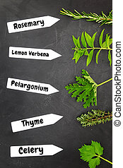 Various types of herbs with name tags on black background