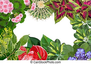 Various types of houseplant flowers background top view