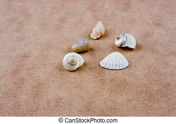 Various types of little seashells on brown background