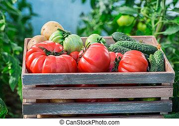 Various vegetables in greenhouse