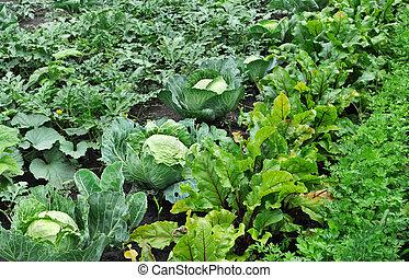 vegetable garden - various vegetables in the vegetable...