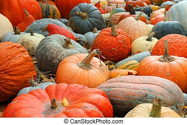 Varities of Pumpkins