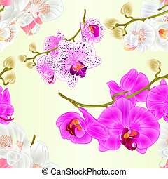 varius, 花, ブランチ, 紫色, seamless, 手ざわり, phalaenopsis, 白,...