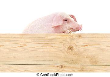 varken, plank