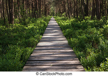 Cognitive track of Varnikai botanical-zoological preserve