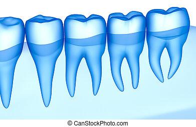 varredura, ilustração, xray, dentes, vista, transparente, 3d
