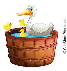 vasca bagno, anatre