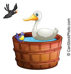 vasca bagno, uccelli