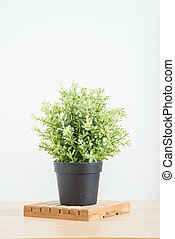 Vase plant decoration in home at window side