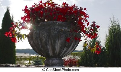 vase with flowers and sun, shoot with slider