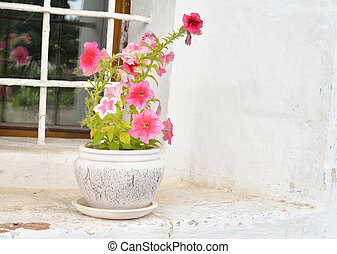 Vase with flowers on the window.