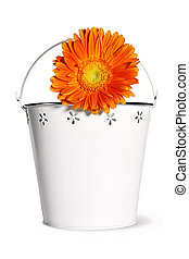 vase with flowers on white background