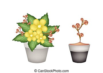 vasi fiore, due, giallo, fresco, simpor