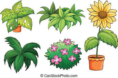 vasi fiori, e, piante