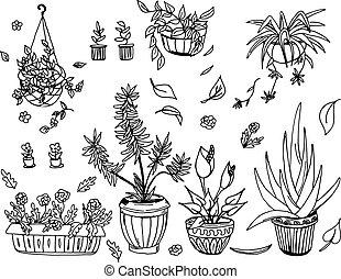 vaso pianta, set