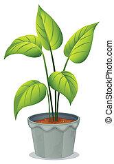 vaso, pianta verde