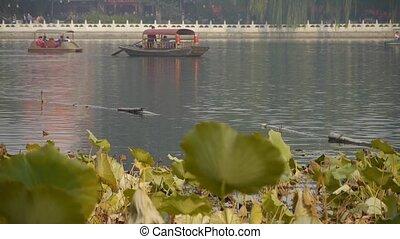 Vast lotus leaf pool in autumn beijing & lake railings.