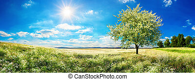 Vast meadow with blossoming tree in spring
