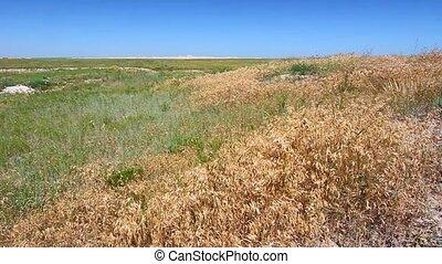 Buffalo Gap National Grassland - Vast prairie of Buffalo Gap...