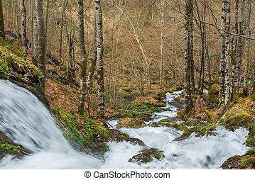vasten, rivier, in, bos