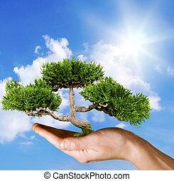 vasthouden, tegen, boompje, blauwe hemel, hand