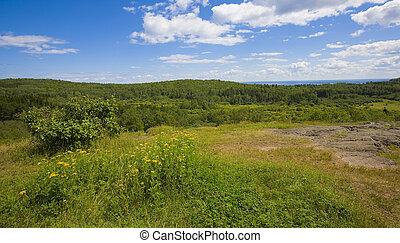 vasto, floresta, paisagem