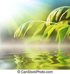 vatten, över, gräs