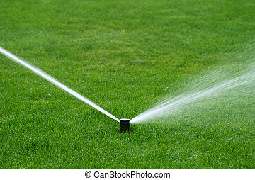 vatten, besprutning, gräsmatta sprinkler