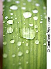 vatten, droppar, bladen
