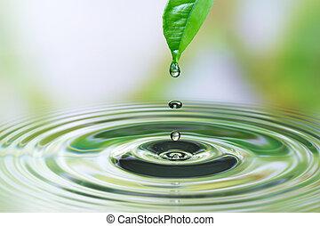 vatten gnutta, på, blad