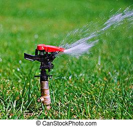 vatten, gräsmatta, trädgård, sprinkler