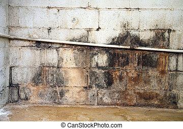 vatten, skadat, och, möglig, källarvåning, vägg