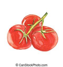 vattenfärg, vektor, bakgrund, vit, tomato., målning