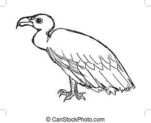 vautour, séance, vue côté