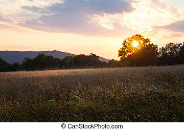 večer, západ slunce peloton, venkov, léto, -