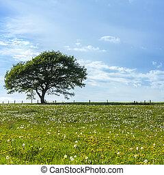 vecchio, albero quercia, con, nubi