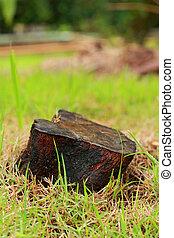 vecchio albero, stumps.