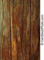 vecchio albero, texture.