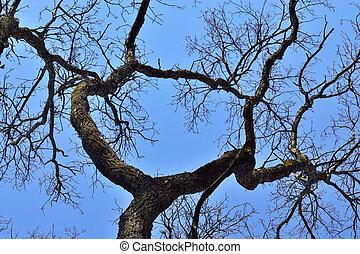 vecchio, asciutto, albero, su, cielo blu, fondo., naturale, fondo