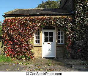 vecchio, cottage, coperto, in, autunno, edera