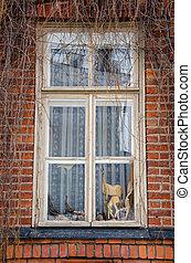 vecchio, finestra.