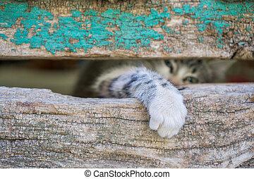 vecchio, gamba, legno, gattino, attraverso, piccolo, porta, buco