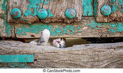 vecchio, legno, gattino, attraverso, fuga, piccolo, porta, buco, tentando