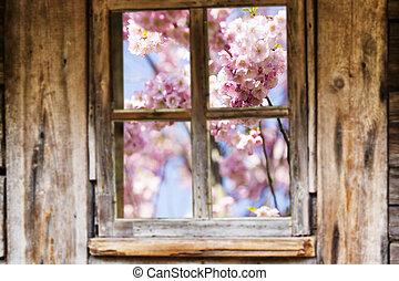 vecchio, primavera, cornice, legno, alberi., finestra, fioritura