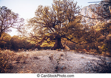 vecchio, sardegna, albero, gola, -, do, gorroppu, percorso