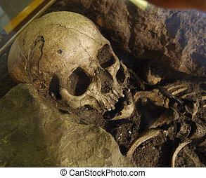 vecchio, scheletro, umano